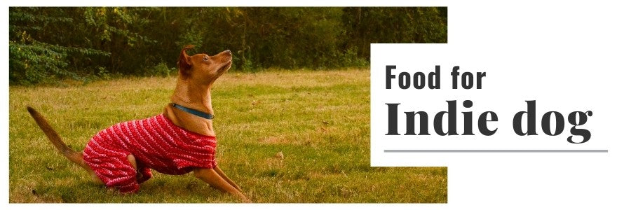 Dog Food For Indie's