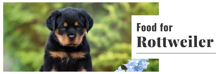 Food For Rottweilers