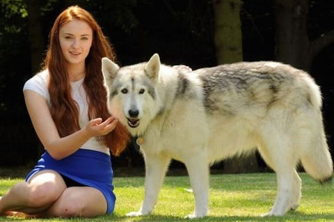 Game of thrones dog with Sophie Turner-Poochles