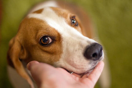 Disadvantages Of Dairy Cheese For Dogs