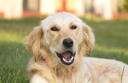 Caring For Dog With Lactose Intolerance