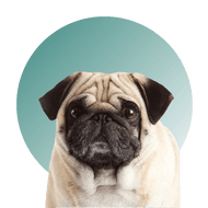 Products For Pug