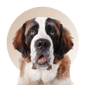 Products For St Bernard