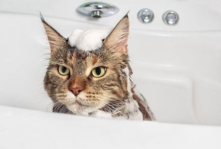 How To Bathe Cat At Home