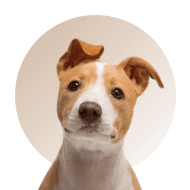 Products For Terrier