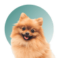 Products For Pomeranian