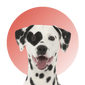 Products For Dalmatian