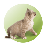 Shop for Cat Products