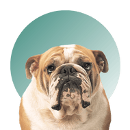 Products For Bulldog