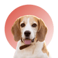 Products For Beagle