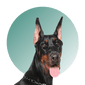 Products For Doberman