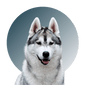 Products For Husky
