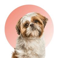 Products For Shih Tzu