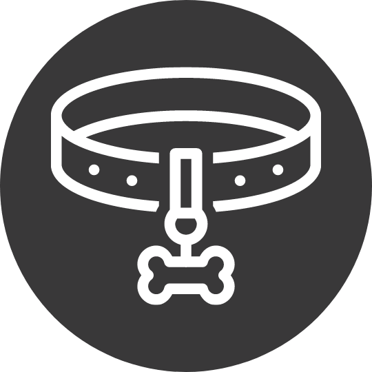 Collars & Leashes For Dogs and Puppies