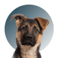 Products For German Shepard
