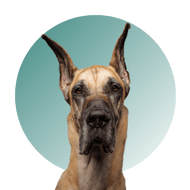Products For Great Dane