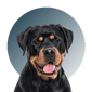 Products For Rottweiler