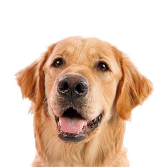 Dog Food for Puppies and Dogs