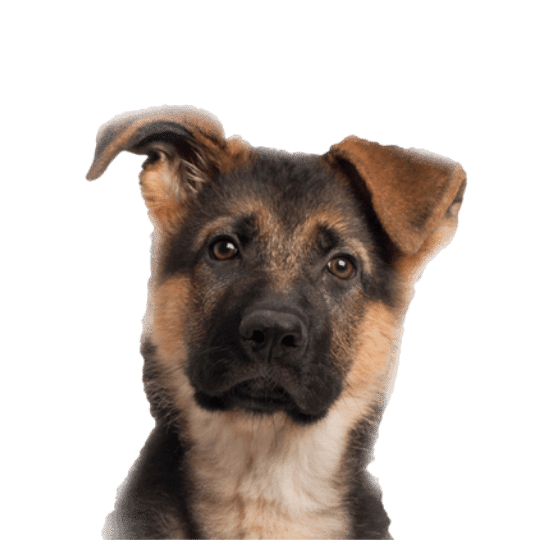 Dog Toys For Puppies and Dogs