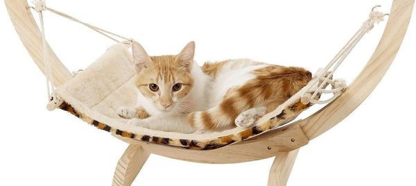 Cat Hammocks & Swing Chairs