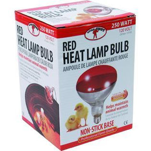 Heat Bulb for Chickens