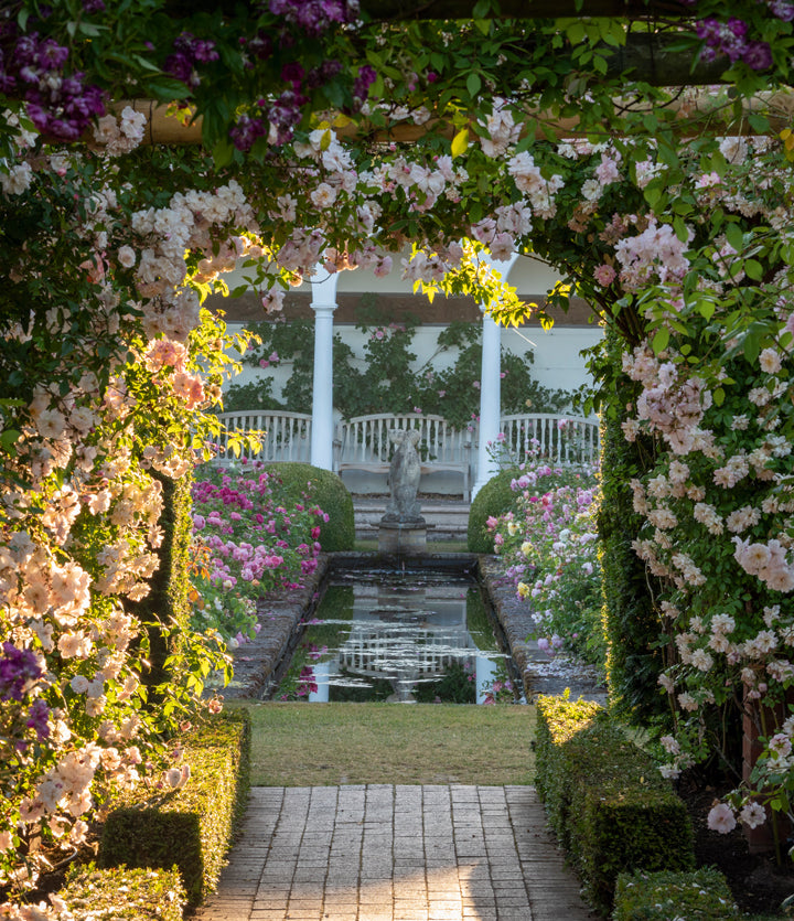 View through rose covered pergola into the Renaissance Garden at David Austin Rose Gardens