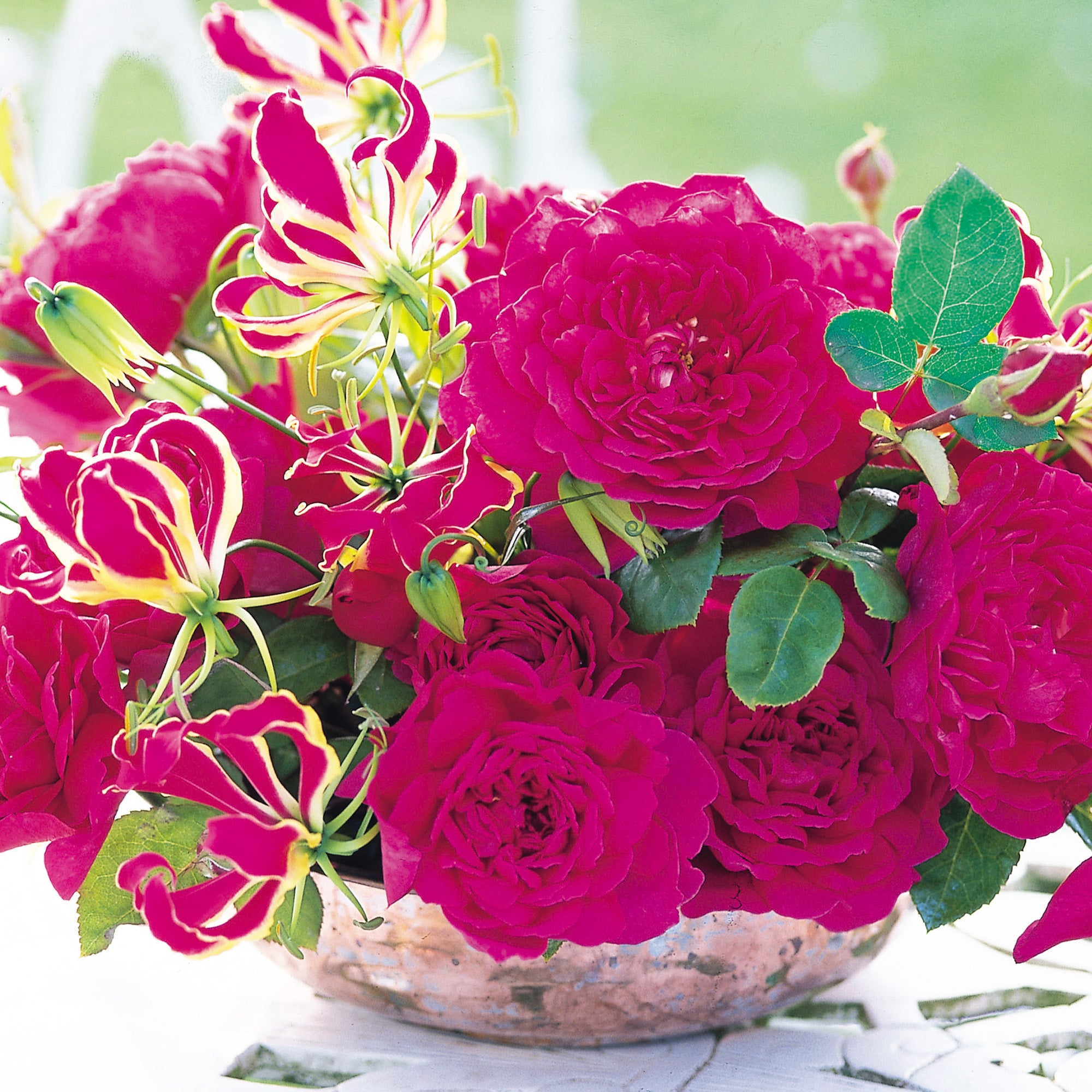 Buy Red Roses Uk Delivery David Austin Roses