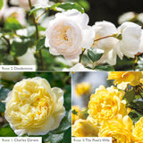 Fragrance Bundle - Yellow & White Shades