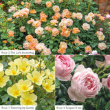 Bee Friendly Bundle