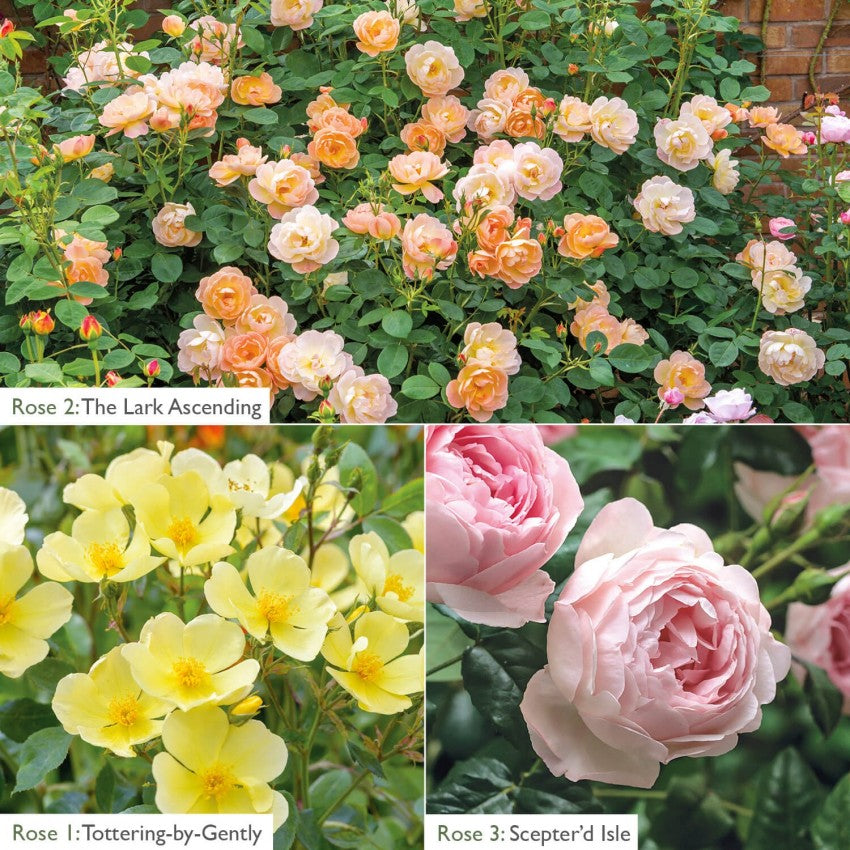 //cdn.shopify.com/s/files/1/0100/6341/3329/products/4b0c275734d42a04351fa7b321d85bea_94f777ff-be38-4c0b-8236-89ee70307134_600x.jpg?v=1595524427