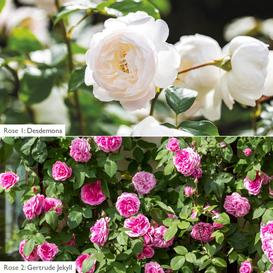 6ft Fence & Border Bundle - White & Pink Shades