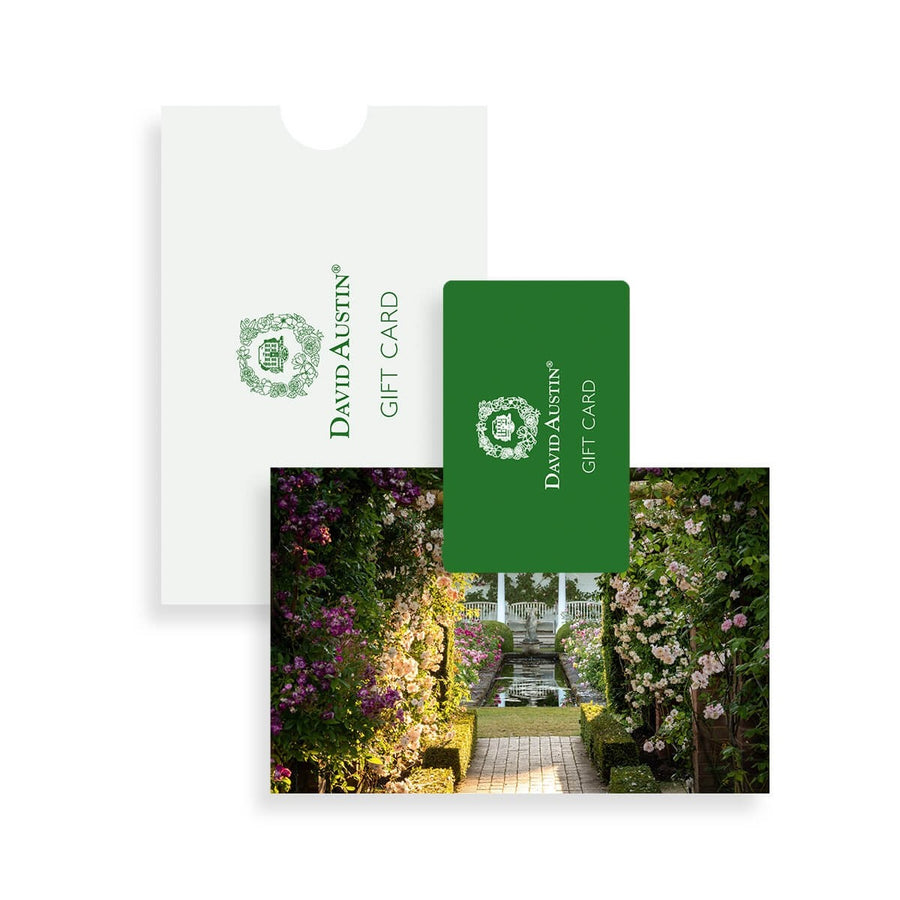 Gift Card, The Renaissance Garden at sunrise