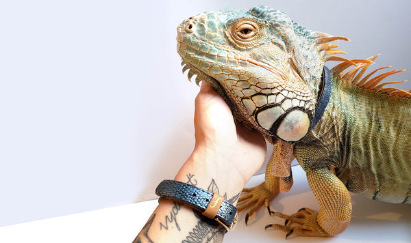 Lorren & Blue the Green Iguana