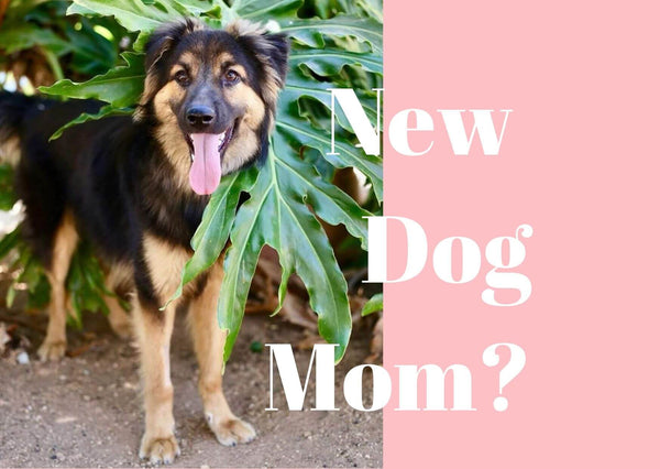 Becoming A Dog Mom For The First Time