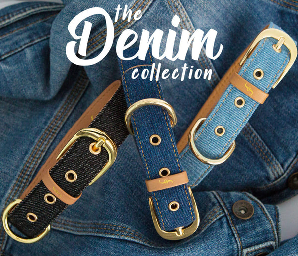 Dogs Deserve Denim!