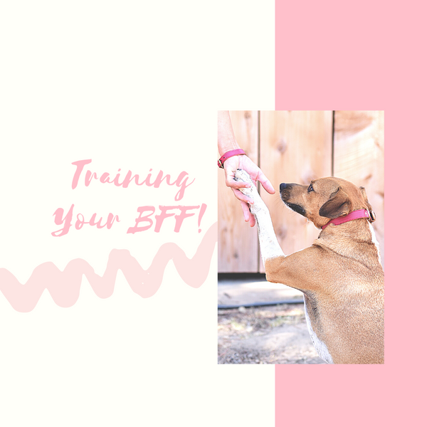 Training your BFF!