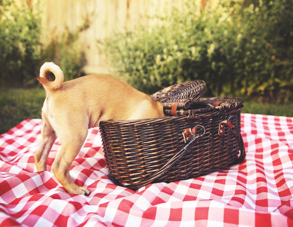 Healthy Pup Picnic Snacks