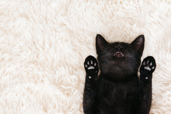 Cool Facts about Black Cats