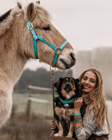 Fjord horse friendship halter hot to trot with Dog