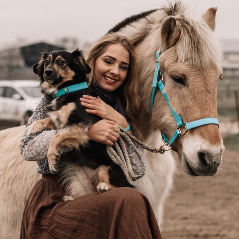 Fjord horse friendship halter hot to trot with rescue dog