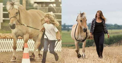 Fjord Horse before and after