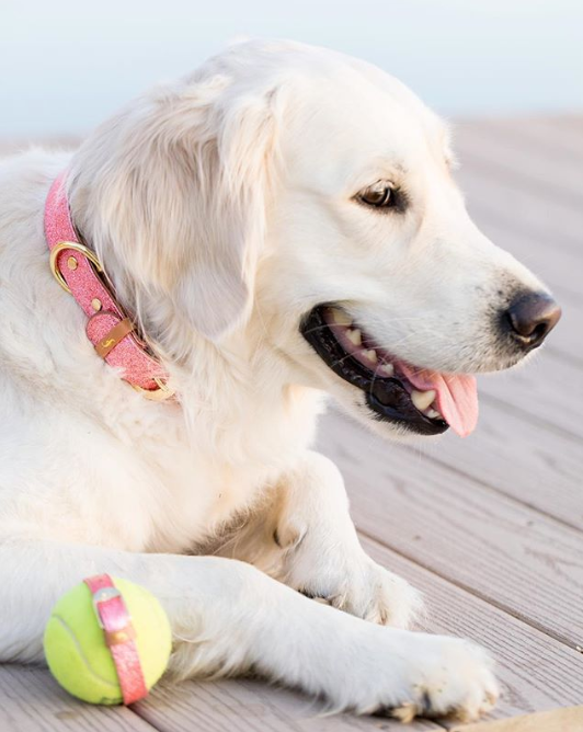 The Sparkling Pup - Pawsitively Pink - Collar Only