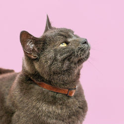 Classic Cat - Cognac - Collar Only