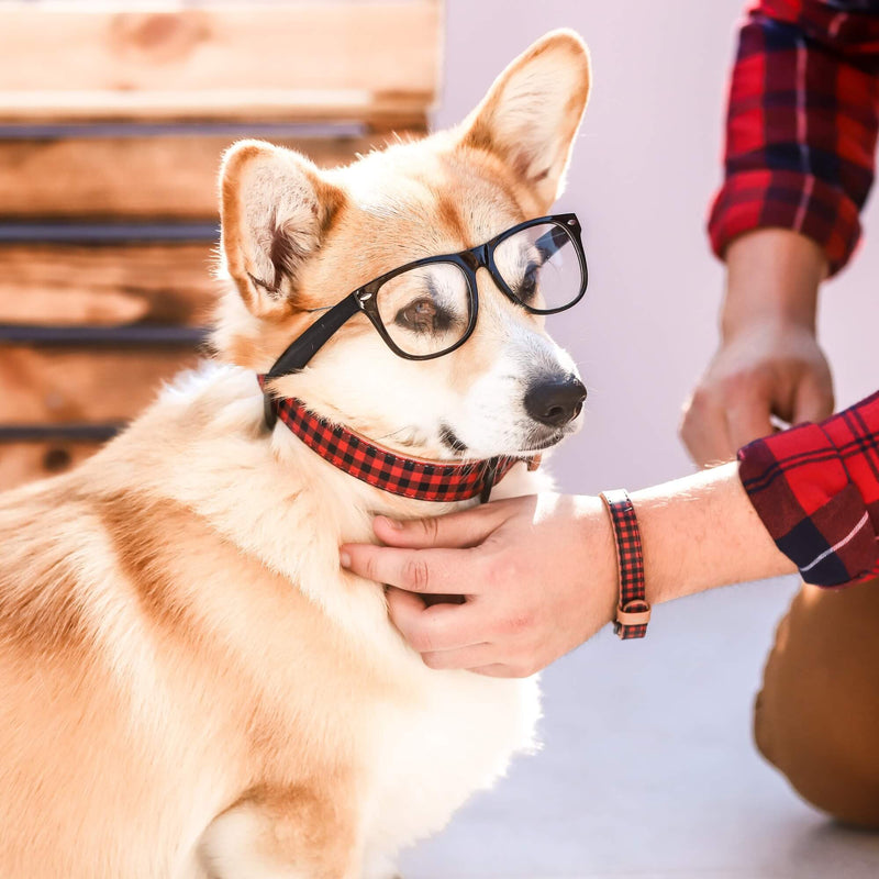 The Hipster Pup