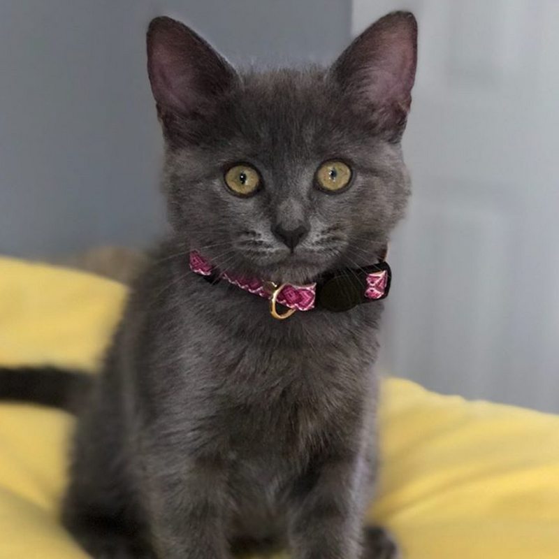 Miss Purrfect - Collar Only