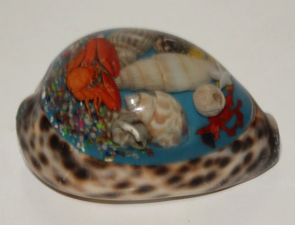 Tiger Shell with Resin art