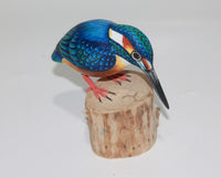 Bird King Fisher