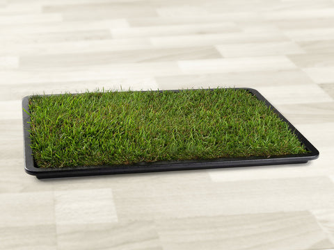 Large Grass Pad with Tray - Looie
