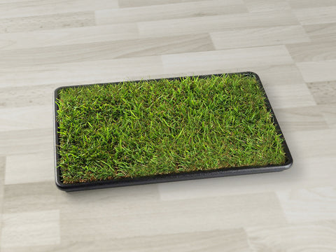 Small Grass Pad with Tray