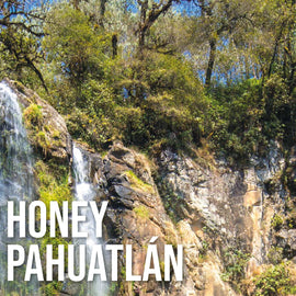 Honey Pahuatlán